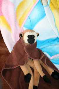 Wilson Linkee in blanket
