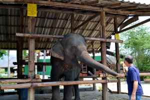 Elephant Linkee 4
