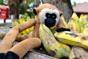 Elephant Linkee banana