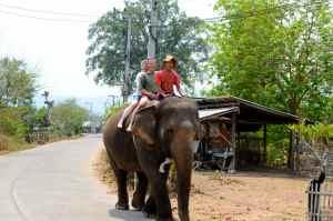 elephant ride 4