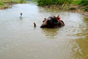elephant ride 8