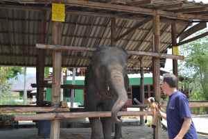 Elephant with Linkee